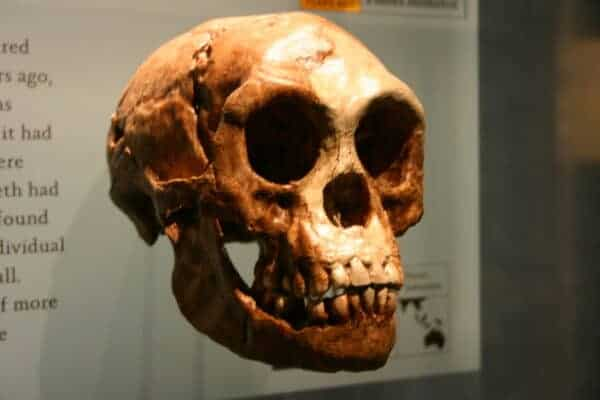 Homo floresiensis, The Conversation 20130211