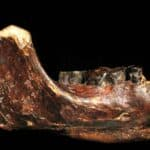 Jawbone of Penghu 1. Source: Ancient Origins, 20150128