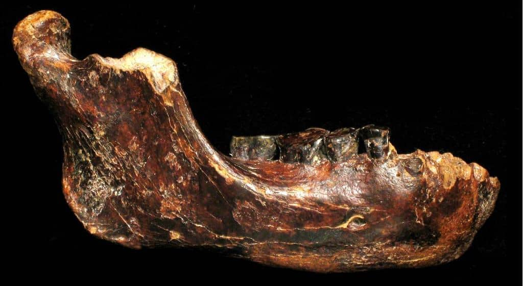 Jawbone of Penghu 1. Source: Ancient Origins, 20150128