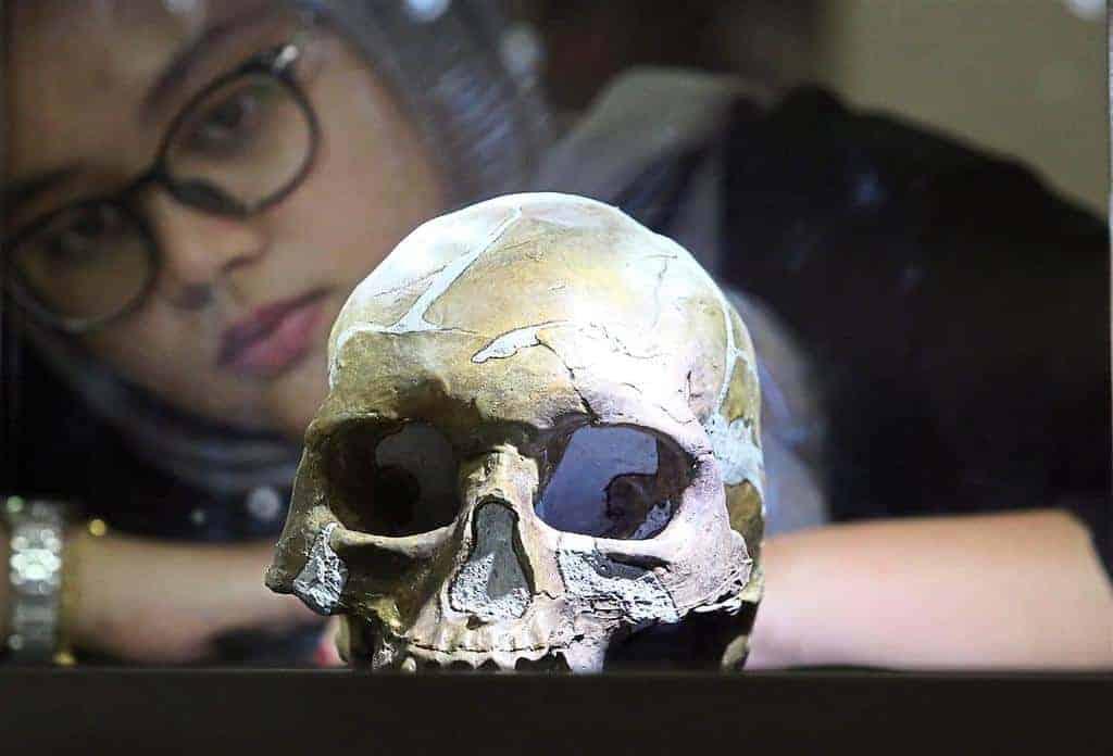 Muzium Negara Pieces Together Origins Of Mankind With Peking Man Exhibit