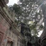 Ta Prohm Tree. Source: The Phnom Penh Post 20140902