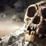 The skull of Homo floresiensis. Source: BBC News 20141021