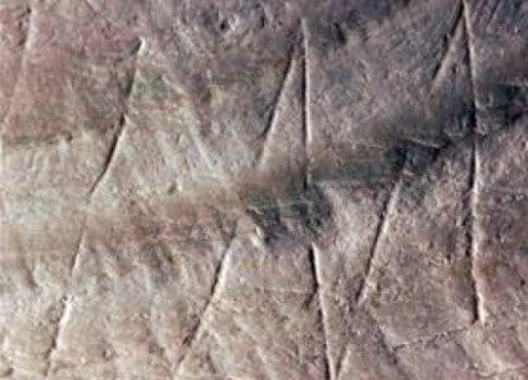Homo erectus engraving