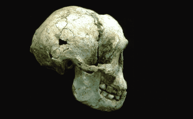 Skull of LB1. Source: The Conversation 20150210