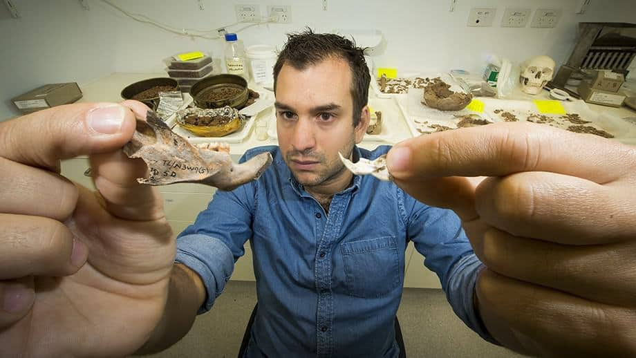 Dr Julien Louys holding up the jawbone fossil of a giant rat found in East Timor, with a modern rat for comparison. Source: ANU 20151106