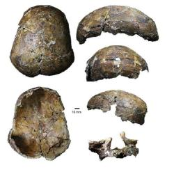 The Deep Skull of Niah. Source: Frontiers in Ecology and Evolution