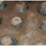Ancient jars found at Ayutthaya's Wat Daeng
