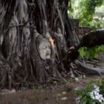 Iconic Ayutthaya Buddha face has near miss with falling branch