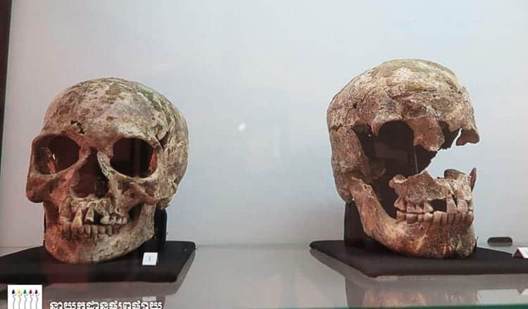 Ancient skulls see light of day