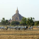 Govt Eases Some Restrictions on Bagan Locals
