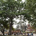 Ayutthaya shows love to big trees