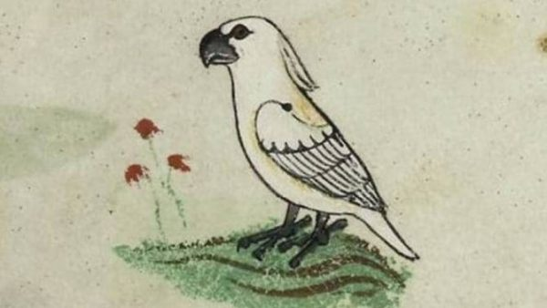 Cockatoo in medieval text reveals extent of East-West trade in the 13th century