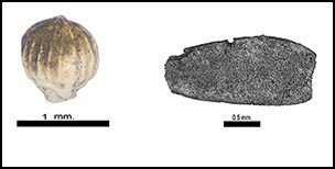 Source: Social responses to climate change in Iron Age north-east Thailand: new archaeobotanical evidence. https://doi.org/10.15184/aqy.2018.198