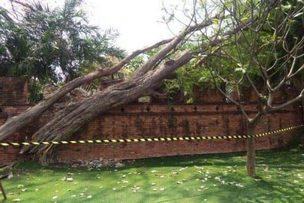 Tree falls over an ancient wall in Kanchanaburi. Source: Bangkok Post, 20191012