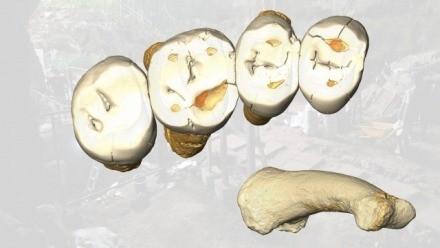 Homo Luzonensis teeth