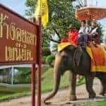 Elephant ride business given 30 days to leave Ayutthaya Historical Park